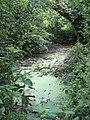 Brackish pool in the Chwarelau woodlands - geograph.org.uk - 844080.jpg