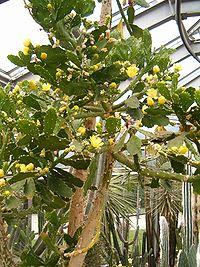 Berlins botaniska trädgård