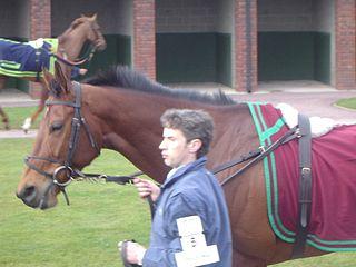 Brave Inca Irish Thoroughbred racehorse