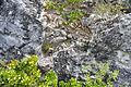 Breccia-filled dissolution pit (Sandy Point Northeast roadcut, San Salvador Island, Bahamas) 4 (16282660237).jpg