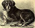 Brehms Tierleben - allgemeine Kunde des Tierreichs - mit 1800 Abbildungen im Text, 9 Karten und 180 Tafeln in Farbendruck und Holzschnitt (1890) (20388202456).jpg