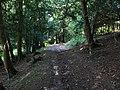 Bridleway in Ashford Hanger - geograph.org.uk - 955811.jpg