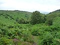 Bridleway into Wood Combe - geograph.org.uk - 1709051.jpg