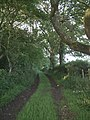 Bridleway through Keeper's Cottage Plantation - geograph.org.uk - 478938.jpg