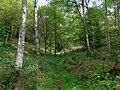 Bridleway through birch wood, near Chesterton, Shropshire - geograph.org.uk - 1307078.jpg