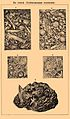 Brockhaus and Efron Encyclopedic Dictionary b16 900-0.jpg