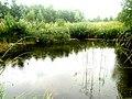 Brodivs'kyi district, Lviv Oblast, Ukraine - panoramio (106).jpg
