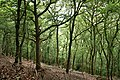 Brompton Regis, Barlynch Wood - geograph.org.uk - 197349.jpg