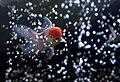 Bubbles (51590554).jpeg