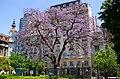 Buenos Aires - Jacarandá.jpg
