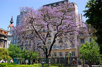 Argentine law - Jacarandá in bloom in Plaza Lavalle, the heart of Buenos Aires' legal district.