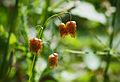 Bulgarian Flora by Katya(14354064388).jpg