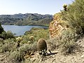 Butcher Jones Trail - Mt. Pinter Loop Trail, Saguaro Lake - panoramio (162).jpg
