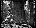 Calaveras Big Trees Redwood Forest.jpg