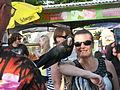 Calyptorhynchus banksii -Mindil Beach Market-8b.jpg