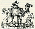 Camel - Thevet André - 1556.jpg