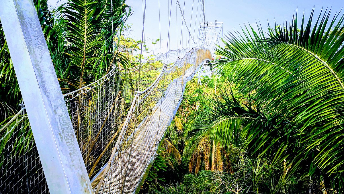 Canopy Walkway LCC.jpg