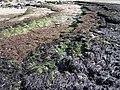 Cap Gris-Nez (6517990997).jpg
