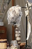 Cap of American opossum with a raccoon tail (Davy Crockett style).jpg