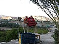 Carantania, Temptation Mount (Jack camel).jpg