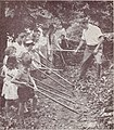 Careers in forestry (1961) (20525273722).jpg