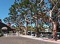 Carlsbad Cityscape Trees 2013.jpg