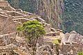 Casal de Lhamas, nas ruínas de Machu Pichu.jpg