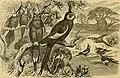 Cassell's book of birds (1875) (14748684374).jpg