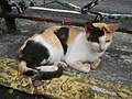 Cats in t1302Cats in the Philippines 19.jpg