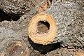 Cavités dans des bûches de peuplier blanc (27).JPG