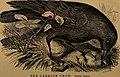 Cecil's book of birds (1869) (14565149150).jpg