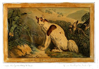 Charles Catton, Animals (1788) Page40 Image1.jpg