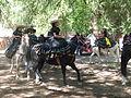 Charreada en El Sabinal, Salto de los Salado, Aguascalientes 14.JPG