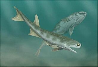 Cheirolepis - Image: Cheirolepis
