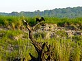 Chobe River (6558985699).jpg