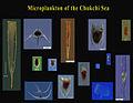 ChukchSeaTins.jpg