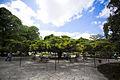 Cipres Portugues (Jardín Principe Real, Lisboa).jpg
