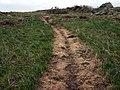 Clegyr Boia weedkiller damage - geograph.org.uk - 738977.jpg