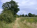 Clopton Way looking towards Arrington - geograph.org.uk - 498036.jpg