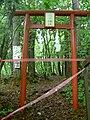 Closing of Yoshida lava tree molds for coronavirus.jpg