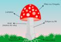 Cogumelo basidio.png