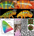 Colour change and iridophore types in panther chameleons.png