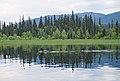Common loons swimming in Swan Lake (DSCF3780).jpg