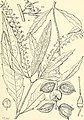 Comprehensive catalogue of Queensland plants, both indigenous and naturalised. To which are added, where known, the aboriginal and other vernacular names; with numerous illustrations, and copious (14802859243).jpg