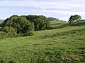 Copse near Abbott's Wootton - geograph.org.uk - 477154.jpg