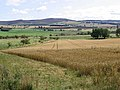 Cornfield near Thistleton Farm - geograph.org.uk - 542508.jpg