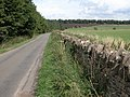 Country road to Salperton - geograph.org.uk - 221756.jpg