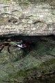 Crab finds shelter (6225521531).jpg