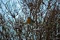 Cramlington NE23, UK - panoramio (1).jpg