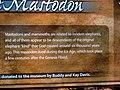 Creation Museum - Kentucky (6009850125).jpg
